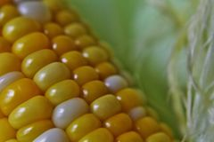 Silk and kernel of corn Stock Photos