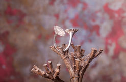 Close up of silver ring Stock Images