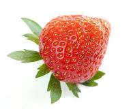 Close-up of single delicious bio strawberry Stock Images