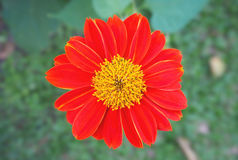 Close up single orange flower. On blurred background royalty free stock images
