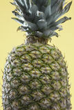Close-up of single pineapple Stock Image