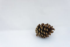 Close up of a single pinecone on a white background Stock Photo