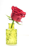 Close up of single red rose in glass vase Royalty Free Stock Image