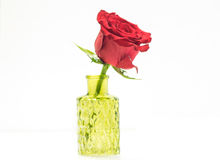 Close up of single red rose in glass vase Royalty Free Stock Photo