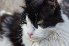 Close up of a sitting cat Royalty Free Stock Photos