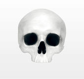 Close up of a skeleton. On white background stock photos