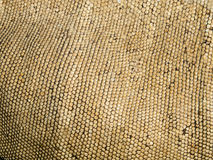 Close up skin of a green iguana Royalty Free Stock Photos