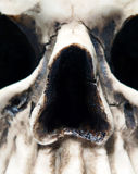 Close up of Skull Royalty Free Stock Image