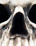 Close up of Skull. Extreme close up of a creepy skull face Royalty Free Stock Image