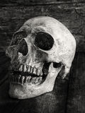 Close up skull face on wooden. Royalty Free Stock Photos