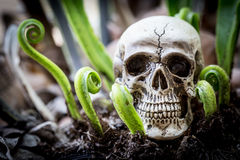 Close up skull human new born fern. Royalty Free Stock Photos