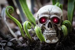 Close up skull human with new born fern. Royalty Free Stock Images