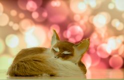 Close-up sleeping fox on the background of the bokee royalty free stock photos