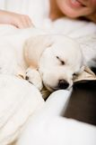 Close up of sleeping puppy of labrador on the hands of owner. Close up of sleeping white puppy on the hands of female owner sitting on the sofa stock image