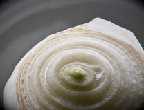 Close up of sliced onion. A close up image of a sliced white onion royalty free stock photos