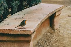 Close-up of a small bird on a stone bench stock images