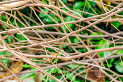 Close up small branch as a texture background Royalty Free Stock Images