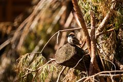 Small brown sparrow stock images