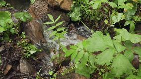Small cascading stream with lush green vegetation in the forest. Close-up small cascading stream with lush green vegetation in the forest stock video