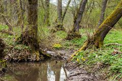 Close-up of a small forest brook Royalty Free Stock Images