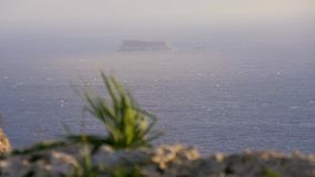 Close-up of a small green plant growing on a rock. Move the focus to the rock in the sea. Nature, Malta, mountains. Close-up of a small green plant growing on a stock video footage