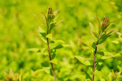 Close up of small green plants Stock Photography