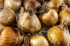 Close up of small onions Royalty Free Stock Images