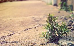 Close up small plant break through cement on street to survive a stock photography