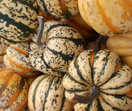 Close up of small pumkins Stock Photo