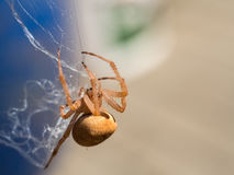 Close-up of small spider weaving its web. Macro photography of a small spider that is weaving its web. Additional RAW file format is available for download stock photography