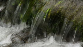 Close up of small waterfall and green plants in nature. Media with audio track stock footage