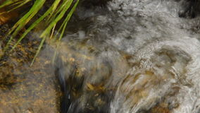 Close up of small waterfall and green plants in nature stock video