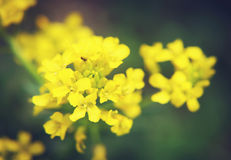 Close up of small yellow flower Stock Image