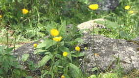 Close up small yellow wild flower stock video footage