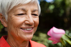 Close-up of smiling senior woman looking at fresh pink rose Stock Images