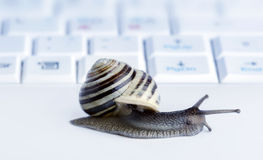 Close up of a snail Royalty Free Stock Image