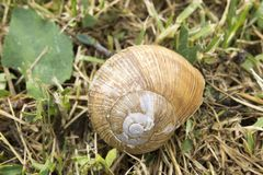 Close-up of a snail house Royalty Free Stock Photography