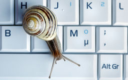 Close up of a snail on a laptop Royalty Free Stock Photos