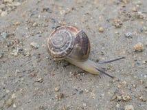 Close-up of a snail Stock Photos