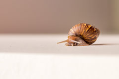Close-up of snail moving Stock Images