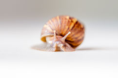 Close-up of snail moving Stock Photo