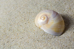 Close-up of snail shell Royalty Free Stock Photos