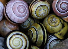 Close up of snail shell Stock Image