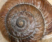 Close up of snail shell. Stock Image