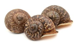 Close-up snail. Snail close-up, macro. Isolated on white background stock photo