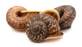 Close-up snail. Snail close-up, macro. Isolated on white background stock photography