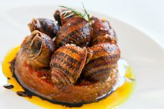 Close up snail starter with tomato. Stock Image