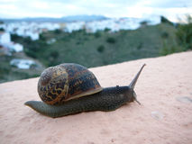 Close up of a snail Stock Images