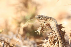 Close up of snake Royalty Free Stock Photography