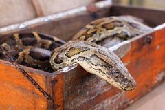 Close-up snake portrait in box stock photos